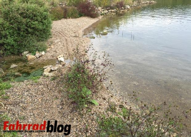 Ufer des Geiseltalsees